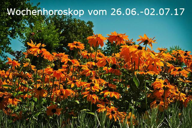 flower-meadow-1517589_640
