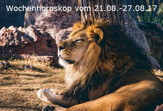 lion-1211424_640