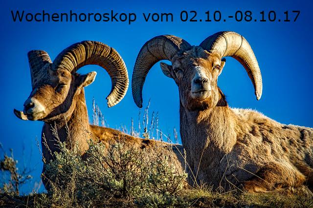 bighorn-1721514_640