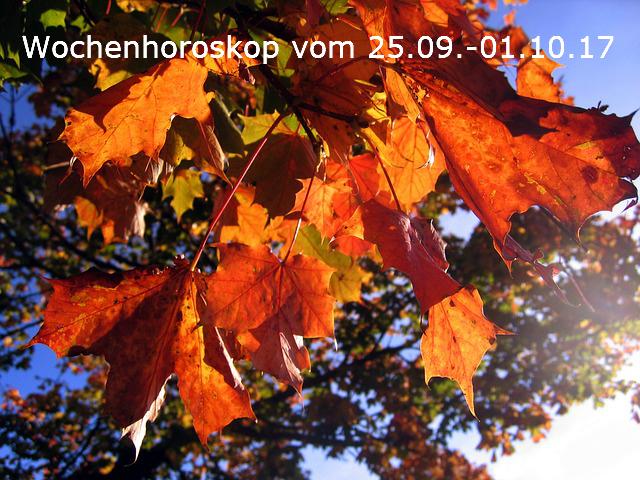 leaves-578903_640