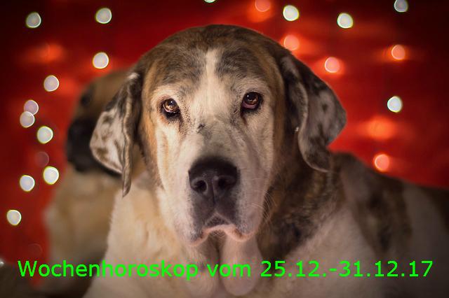 christmas-dog-3009743_640