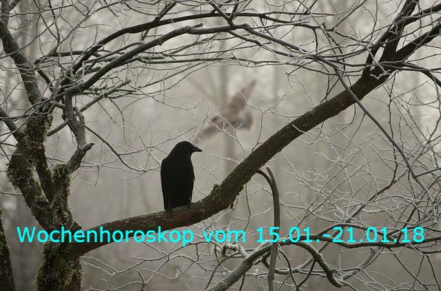 crow-2397589_640