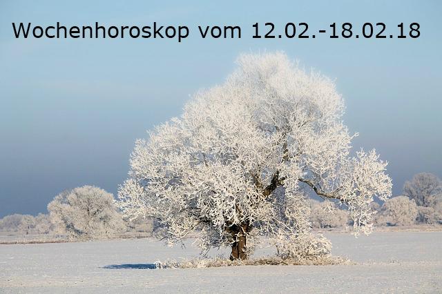 tree-1749239_640