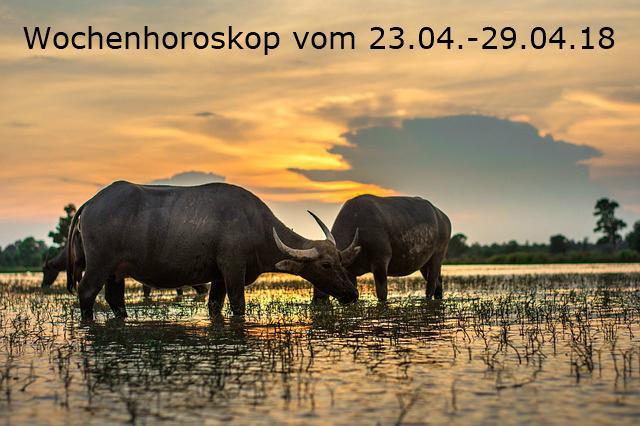 buffalo-2366587_640